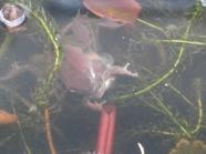 fisky frogs