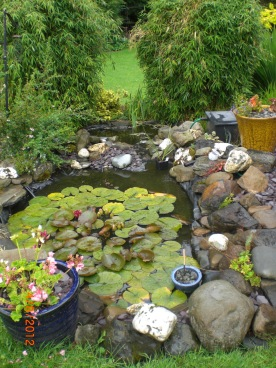 our little pond