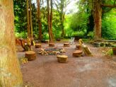 amongst our copse of trees there is a magic fairy circle of seat - its looking particularly tidy in this picture